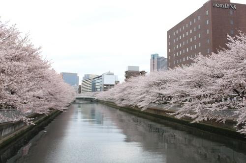深川桜祭り