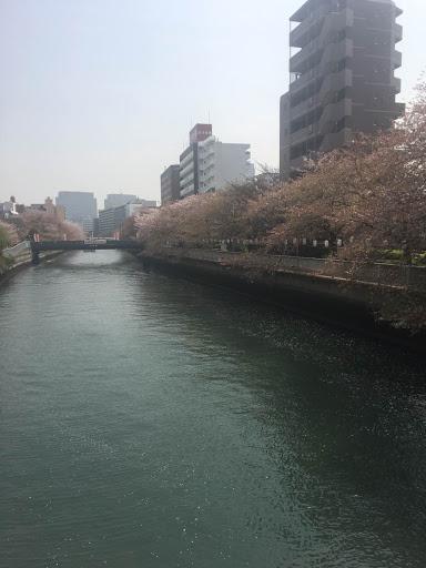 桜 4月3日1